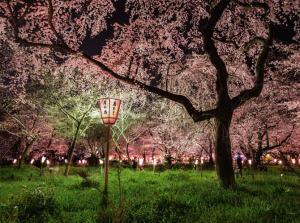 02-hirano-shrine-kyoto-japan-670