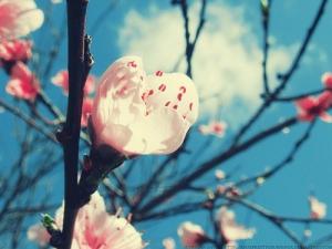 budding flower by *xsoxprettyxburningx on deviantART