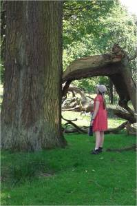 What do you see poem.  Photo of a very large tree with a broken branch forming an archway and a little girl looking up