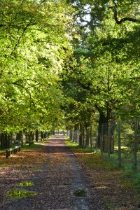 Photo of tree-lined walkway at Dunham Massey, Cheshire UK, Photo by Jeremy Sherlock October 2013