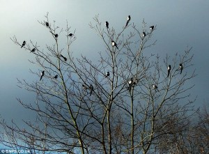 birds on tree_634x469