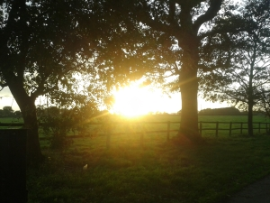 Photo of sunshine beaming through dark trees over fields
