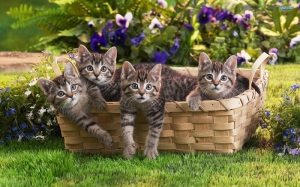 cute  cats photo