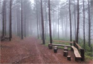 misty woods