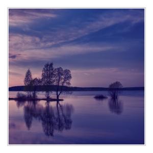 lavender-twilight