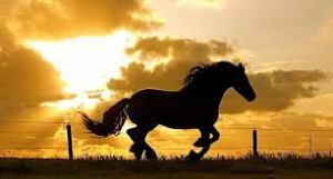 horse white free