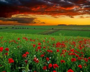 redflowersunset