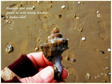 Broken Shell Haiga - my own photograph