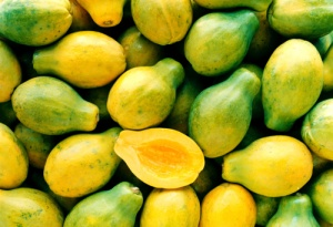 Many papayas colors, yellow and green, one cut in half GR4698                C1171