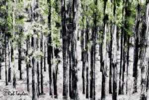 woodsWPblogCR
