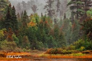forestWPblogCR