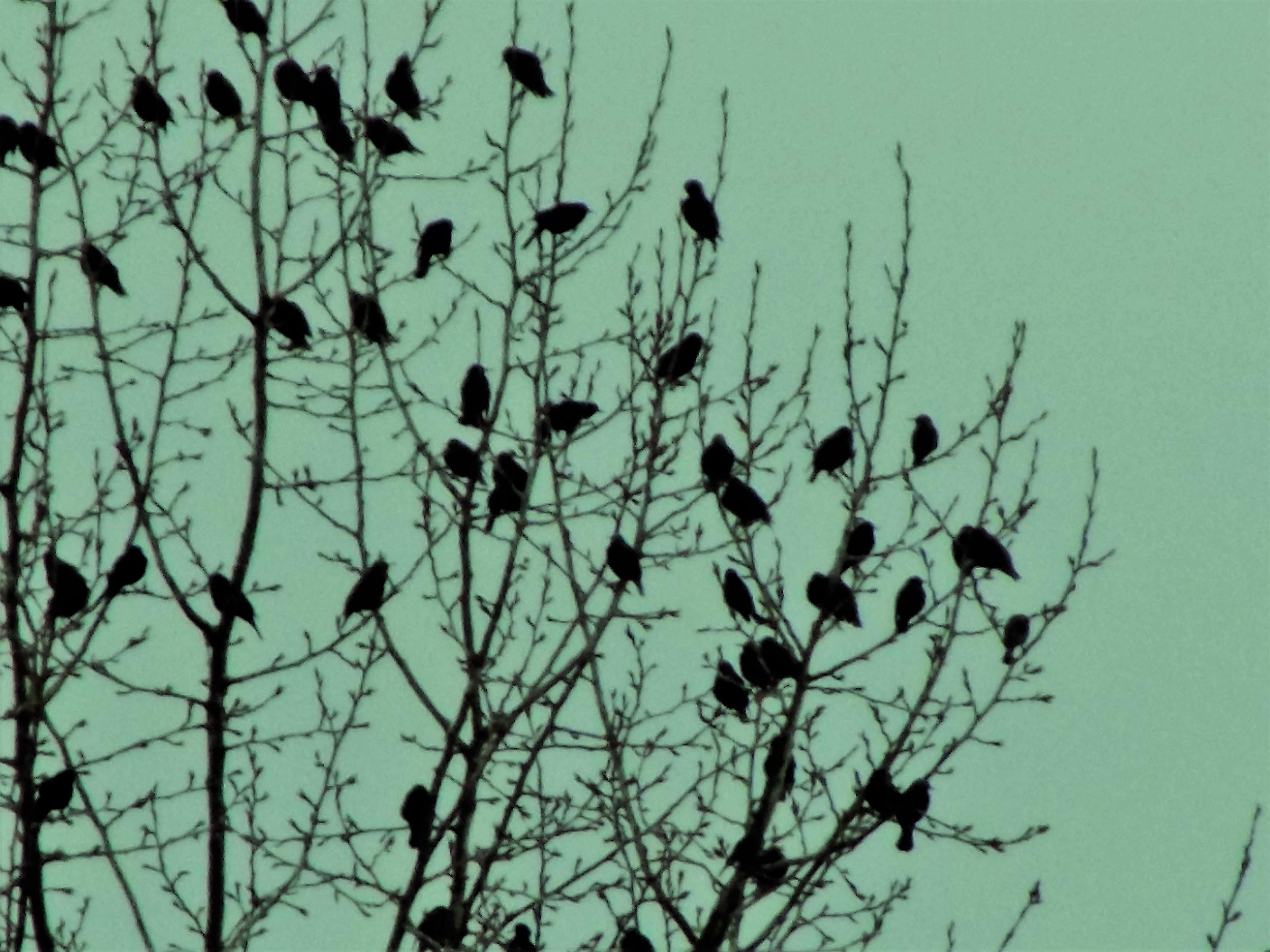 green backdrop birds