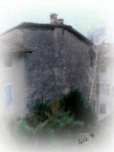 Foggy Courtyard Birch