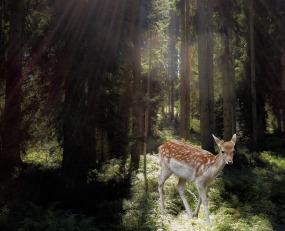 roe-deer-1396281_960_720