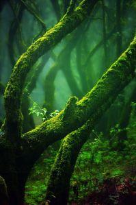 lush-emeraldine-4