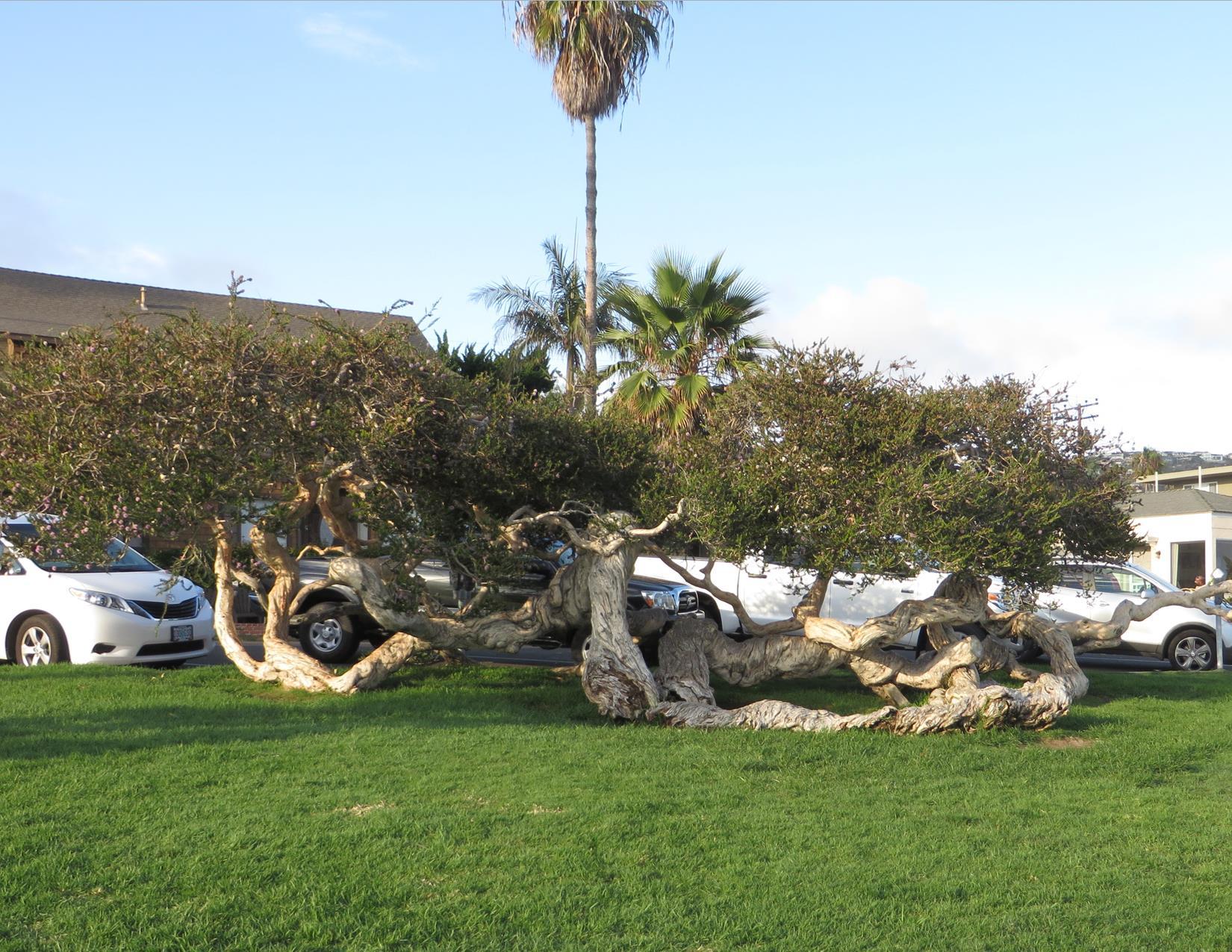 twisted-tree