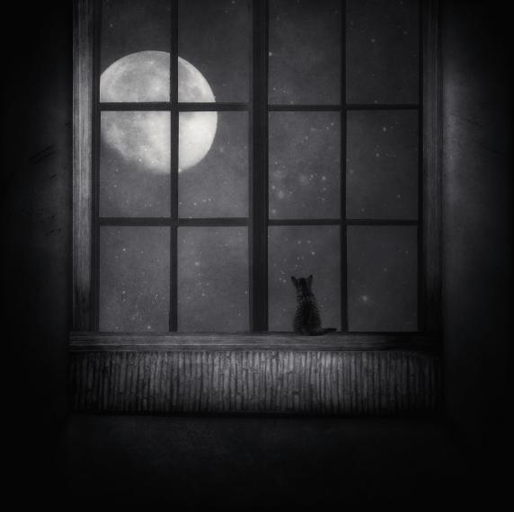 cat-and-moon-kasia-derwinska