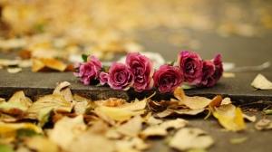 romance-blossoming