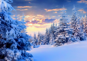 winter-pine