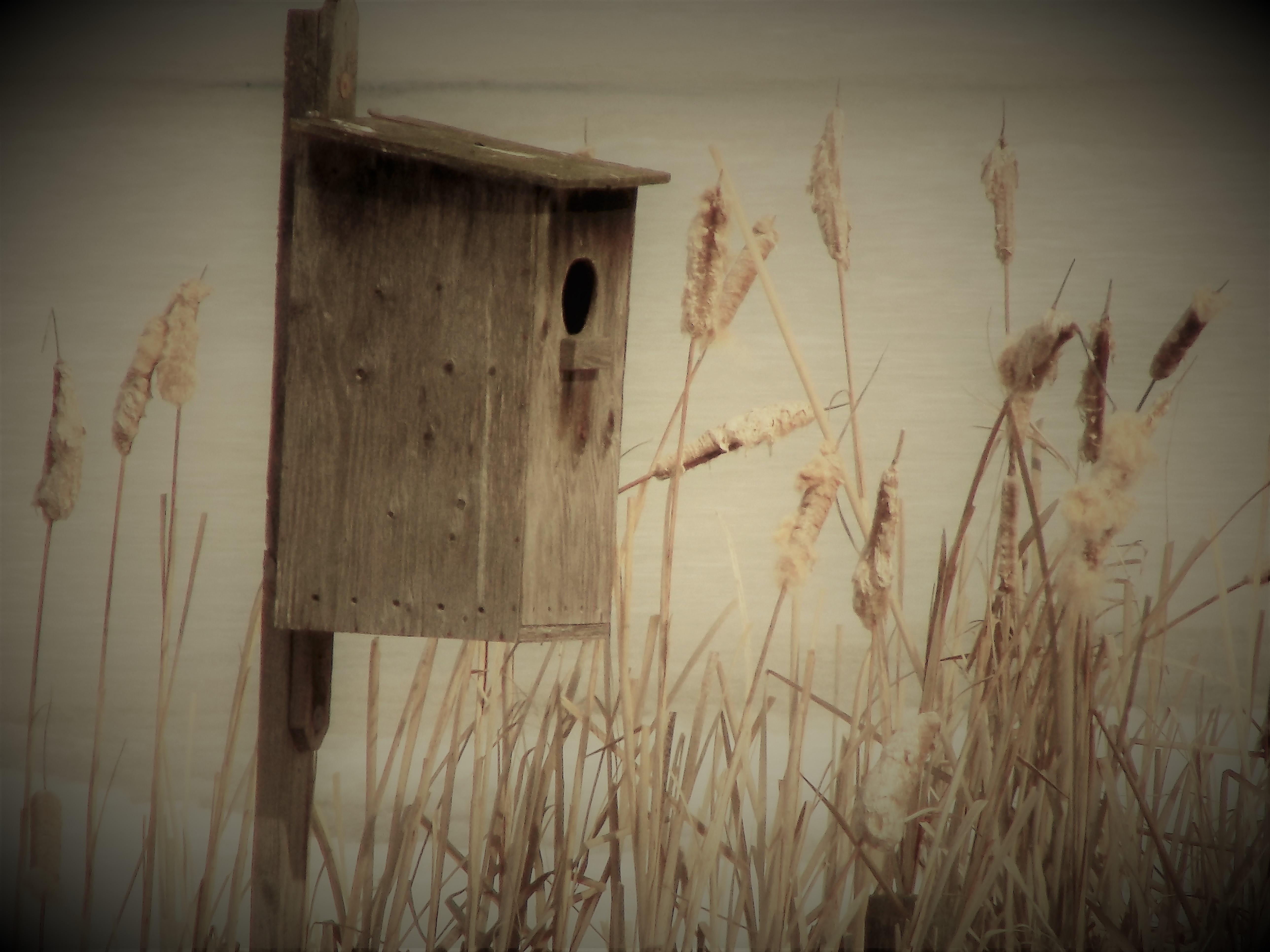 birdhouse Burlesque