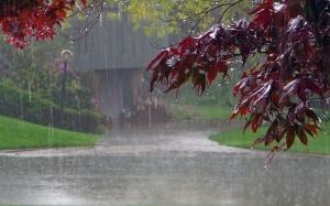 rainy-wallpaper7