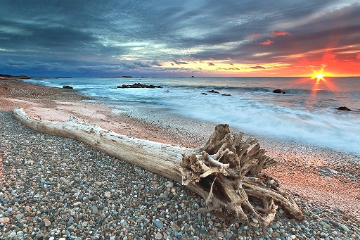 THOUGHTS - DRIFTWOOD ON SHORE AT SUNSET AT 50 PERCENT