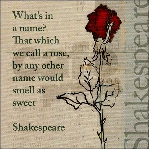 ef78284acd3f6a197f2cbb7eeb8137b3--rose-quotes-poetry-quote-rose