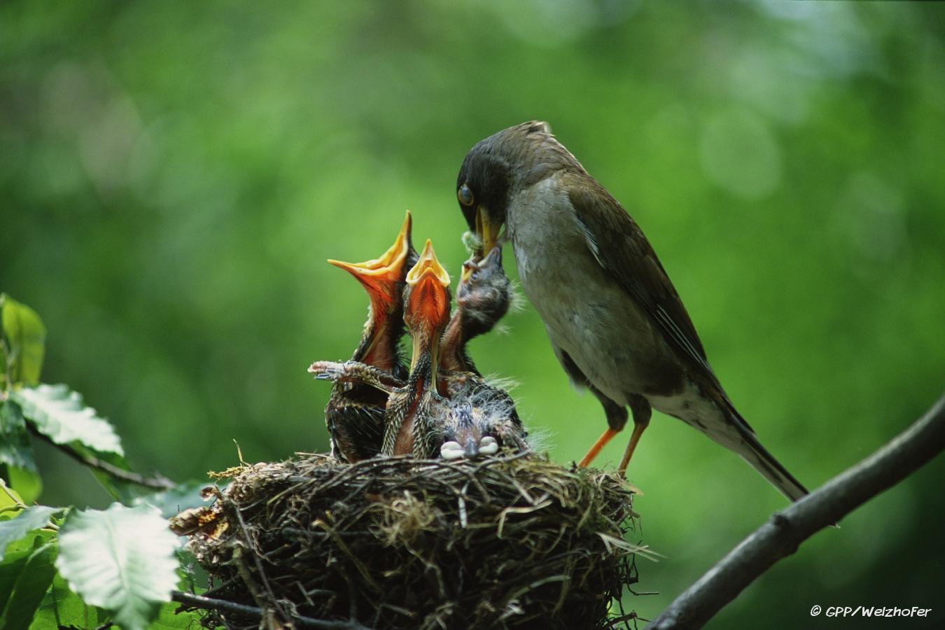feed little birds