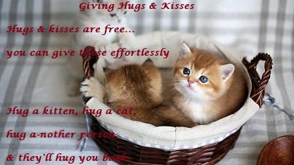 kittin in a basket