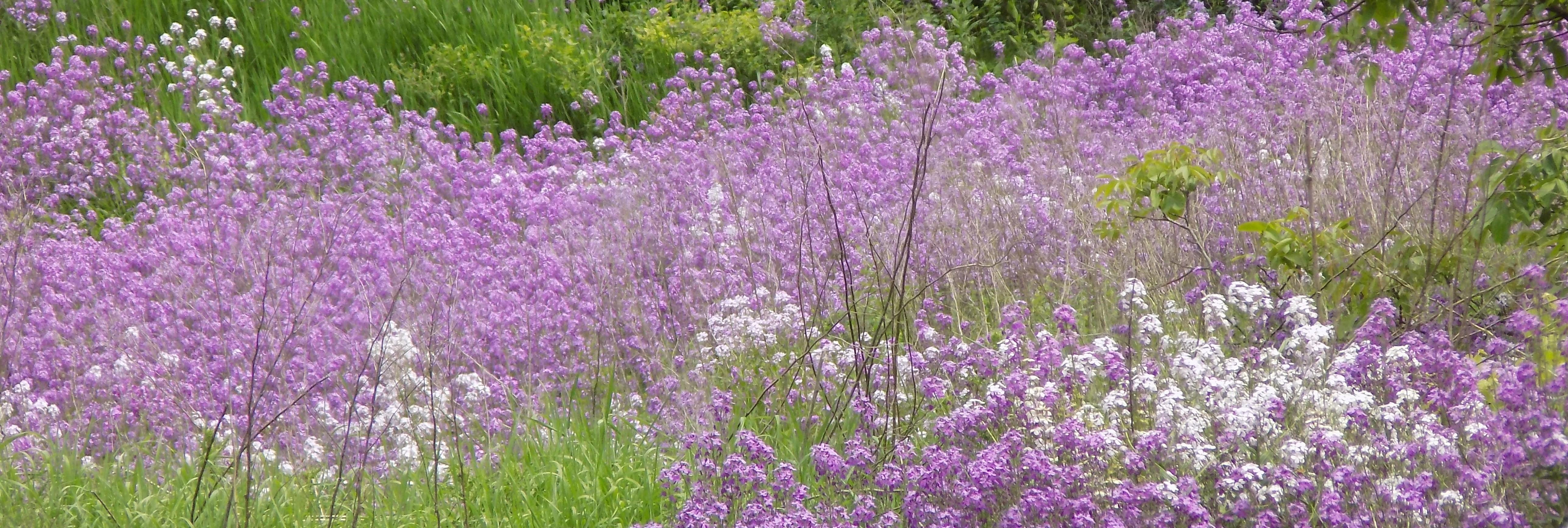 purple flowers header