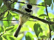 bird-2729982_1920