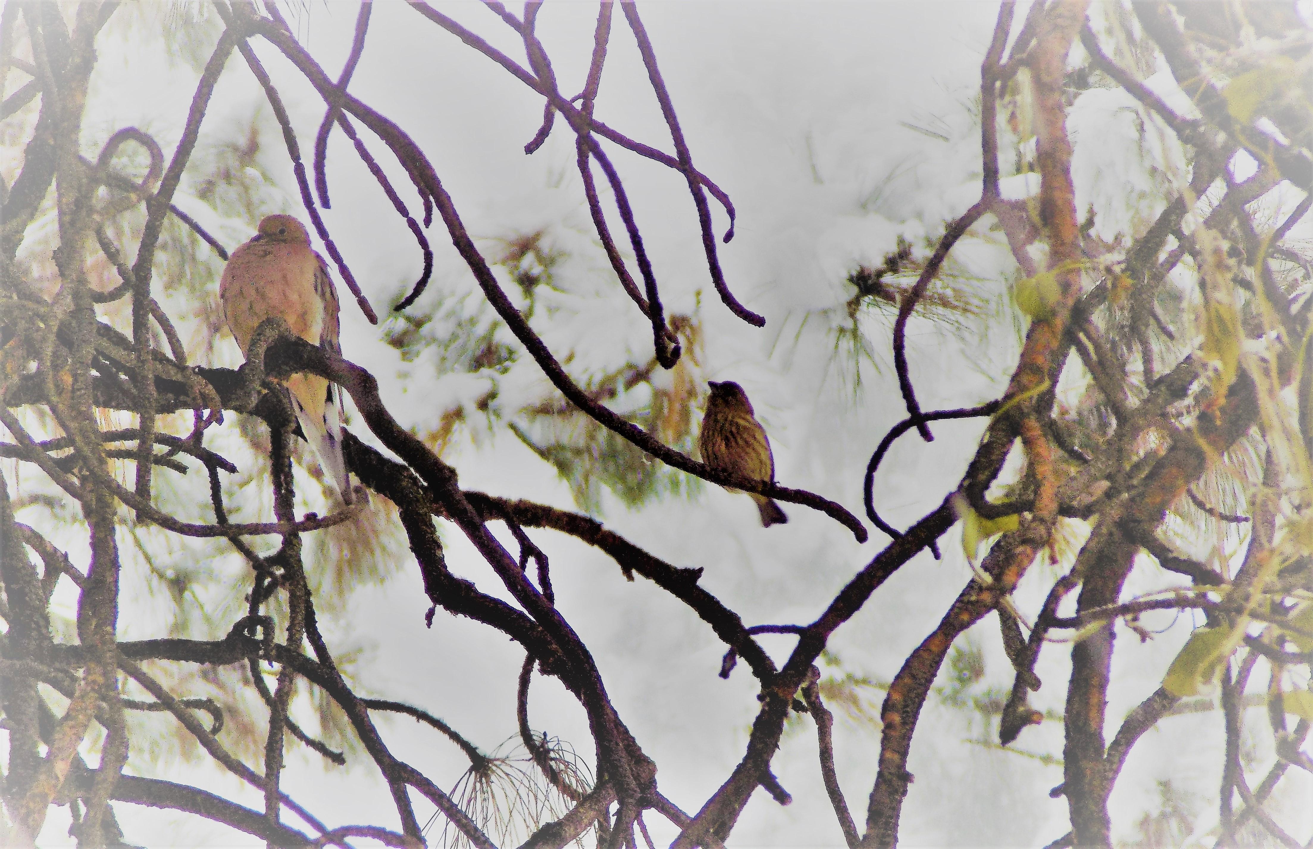 pretty birds animated