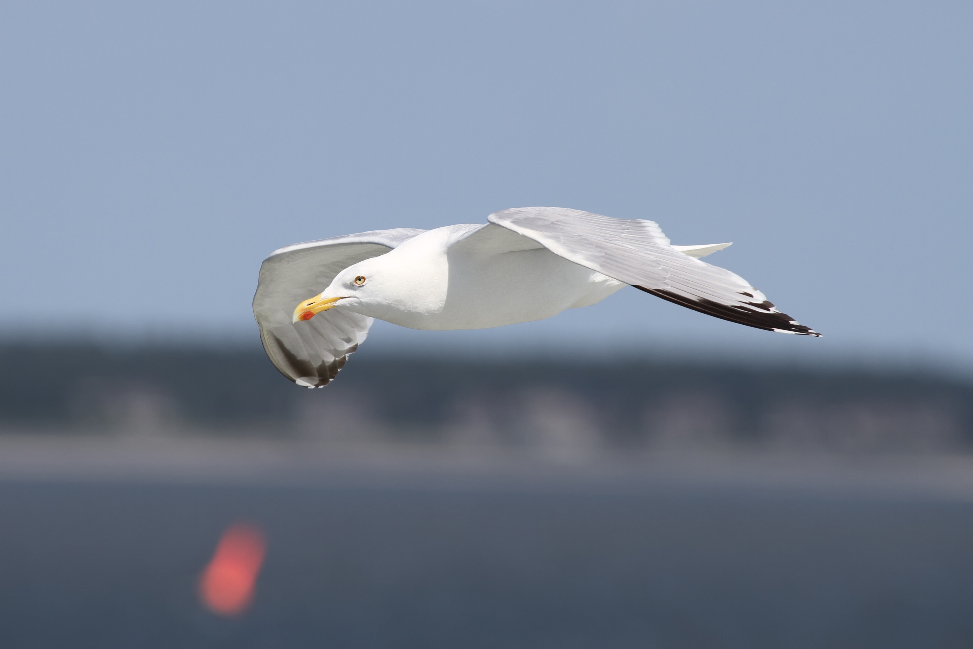 SEAGULL FLOATING