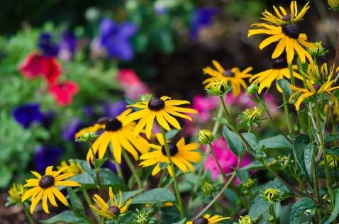 flowers-2268386_960_720