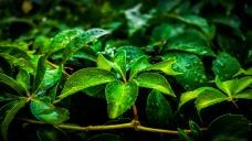 leaf-3267258_1920