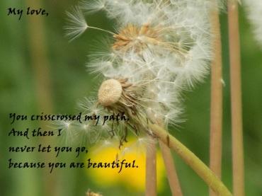 cool dandelions poems