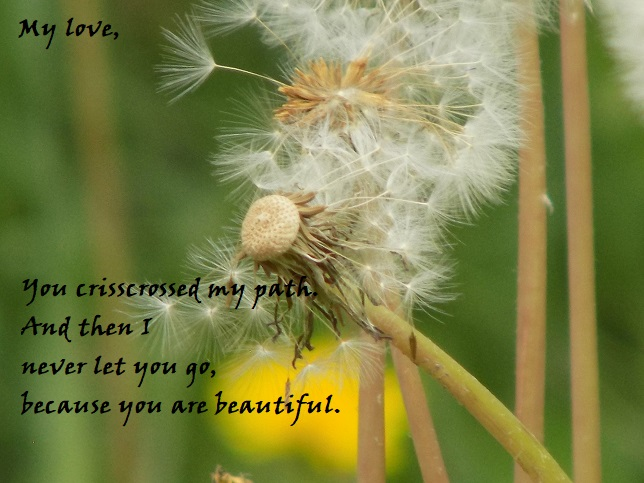 cool dandelions poems