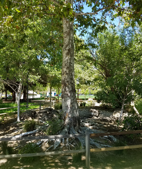 Edith-Morley-Fountain