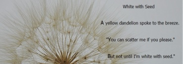 fun with photos and poems