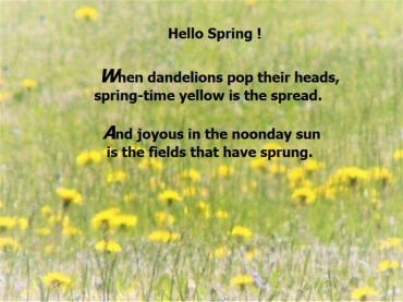 May dandelions 2018