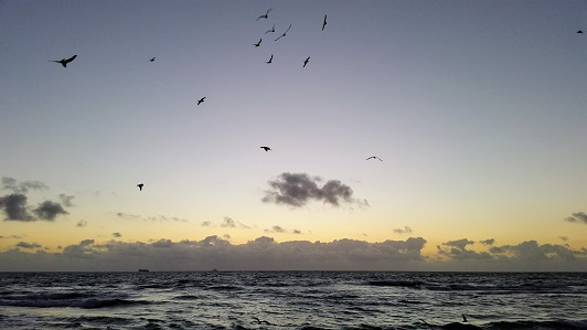 The Sea With Birds and Clouds