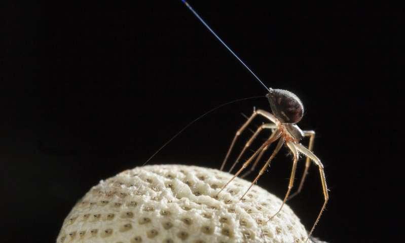 spidersgobal.jpg
