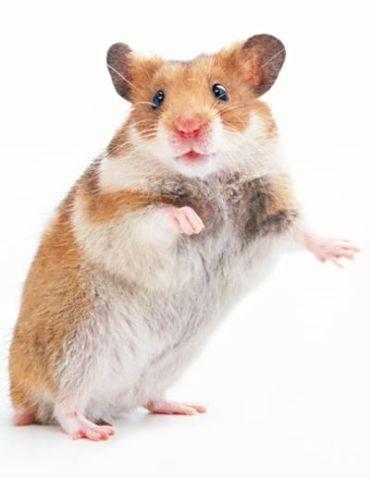 hamster Aug 23rd