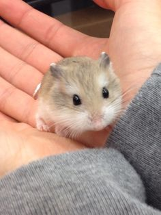 sweet hamster photo