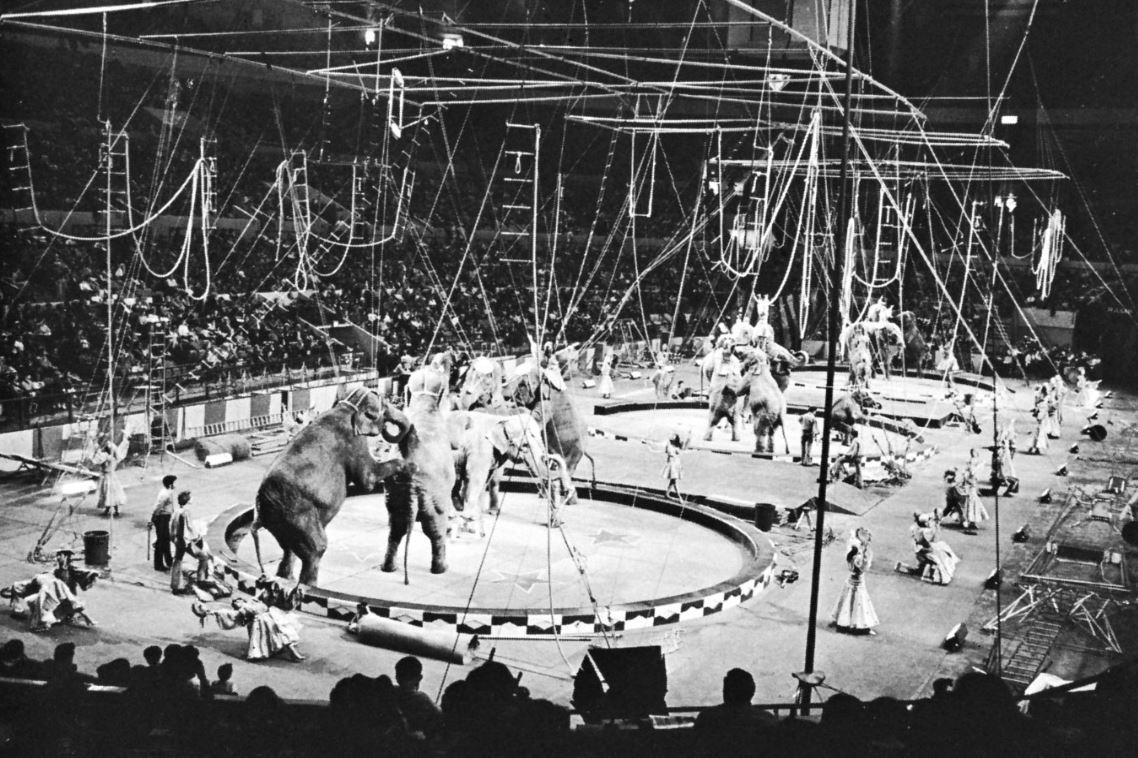 Circusa