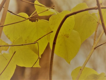 leaves yellow