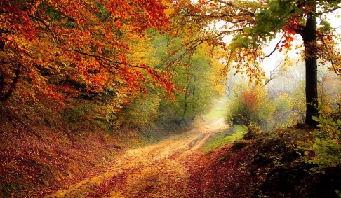 LIFE IS A PATHWAY - AUTUMN PATHWAY