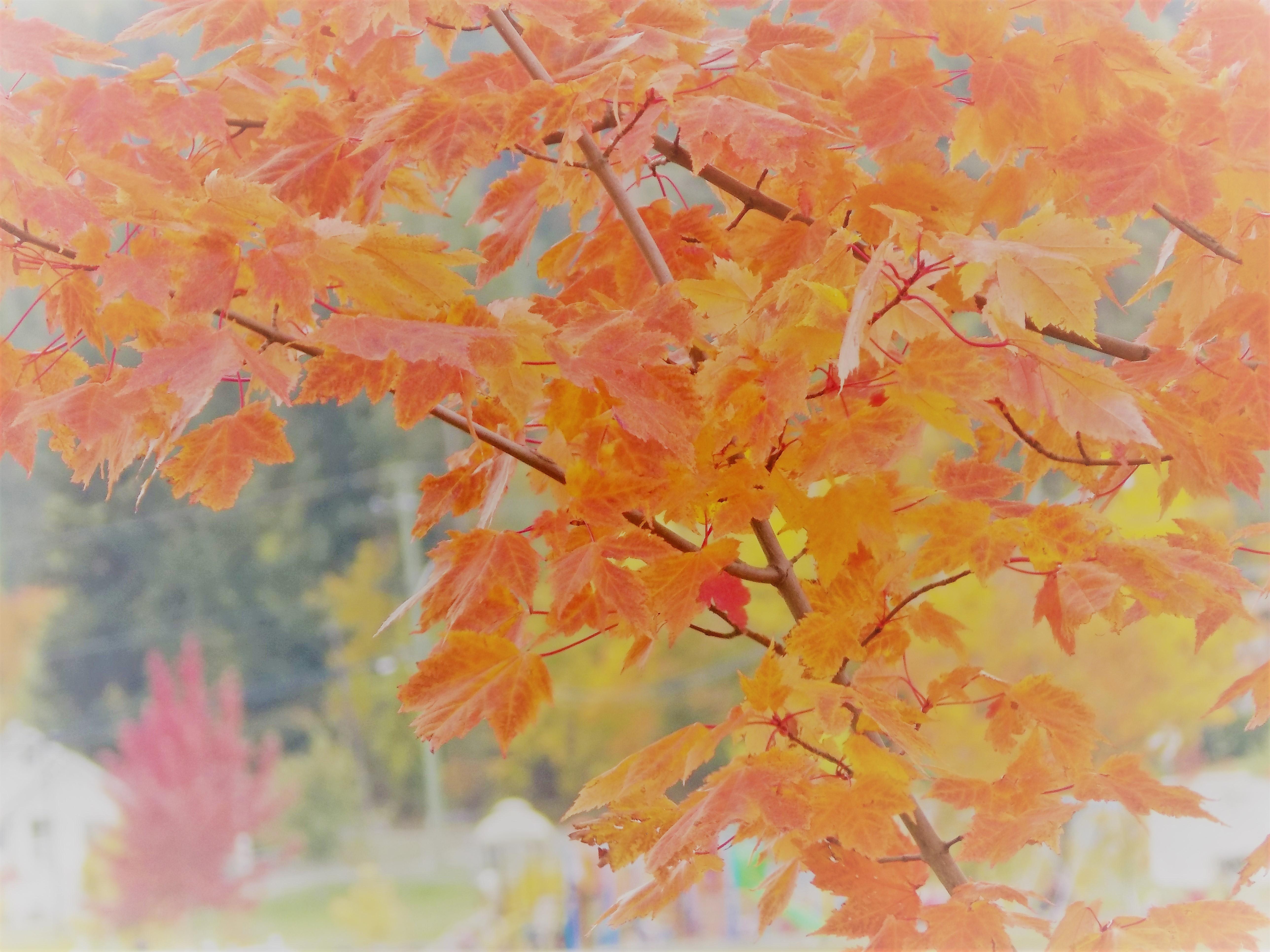 pretty leaves autumn