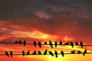 birds-on-wire-against-sunset_21110510