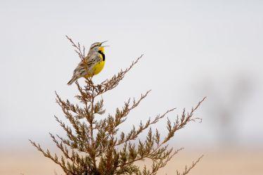 MORNING BIRD SINGING